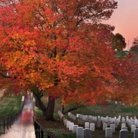 Arlington Cemetery Autumn