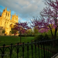 National Cathedral Sunset with Redbud
