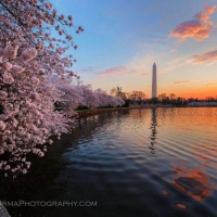 Washington DC Cherry Blossom Sunrise