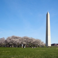 Washington Monument Cherry Blossom