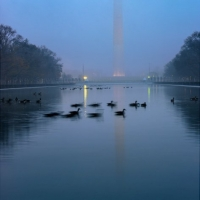 Foggy Sunrise Washington DC Monument Birds