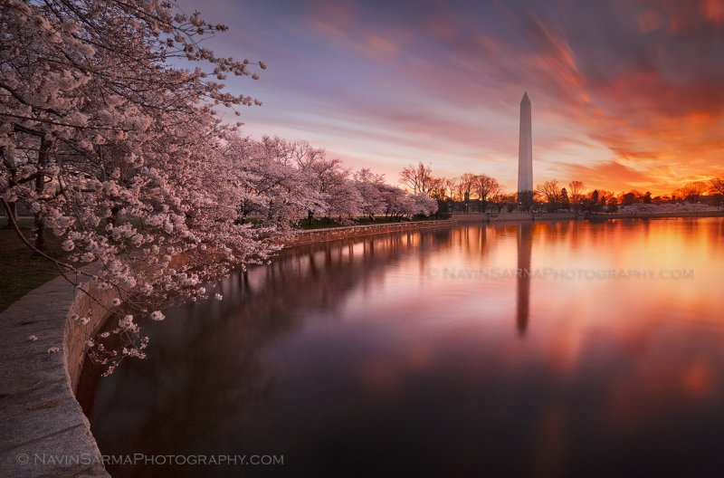 A long exposure streaks clouds and softens reflections at the Tidal Basin at sunrise during peak of 2011′s Cherry Blossom bloom