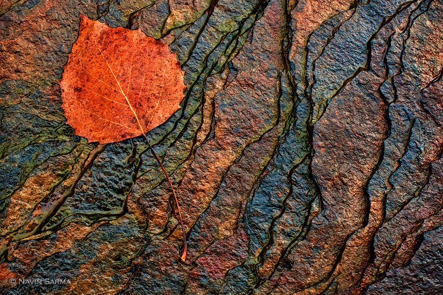 At Blackwater Falls State Park, a lone autumn leaf lies upon delicate ridges of shale, created by sediments from ancient, shallow seas and slowly revealed by the constant flow of the Blackwater River.