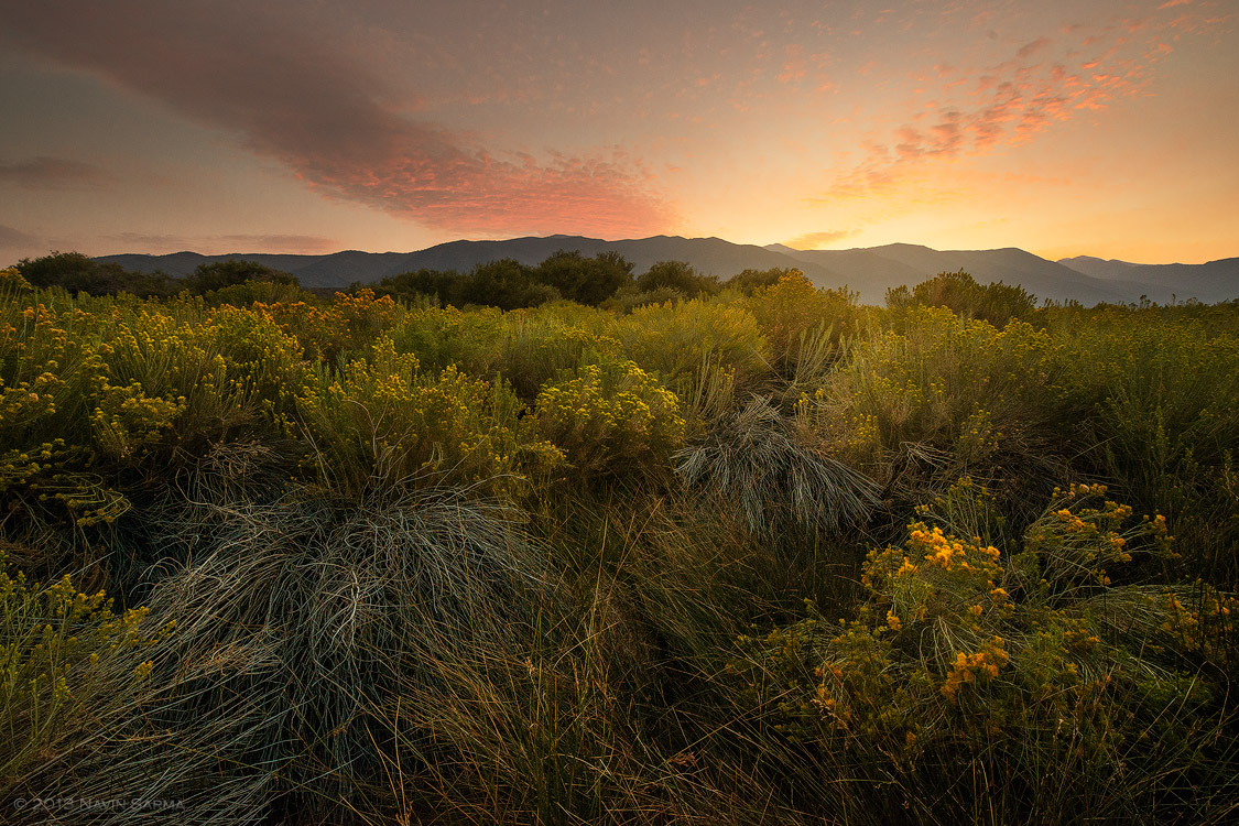 The setting sun brushes color in the sky and strands of light caught by the desert shrubs of Mono Lake.