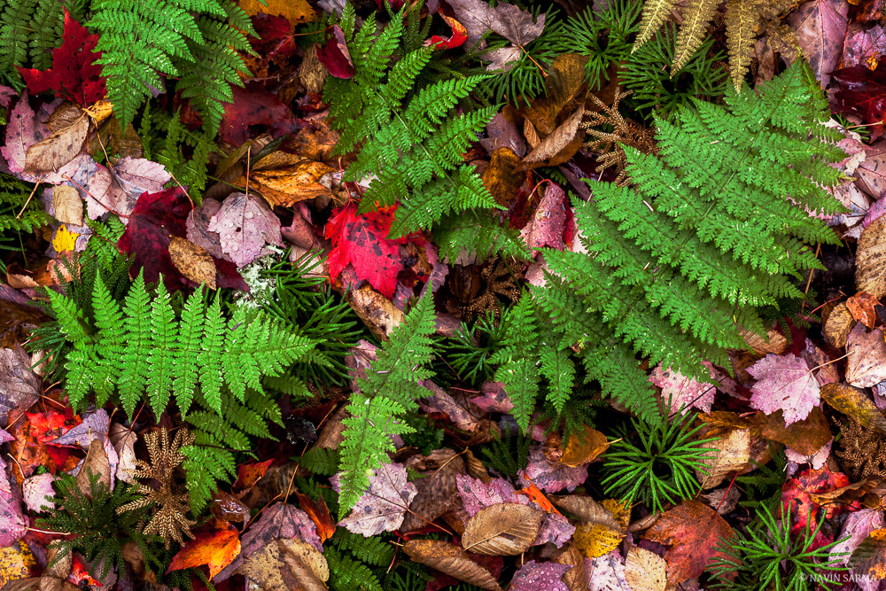 Greens and reds of Autumn as seen on the forest floor