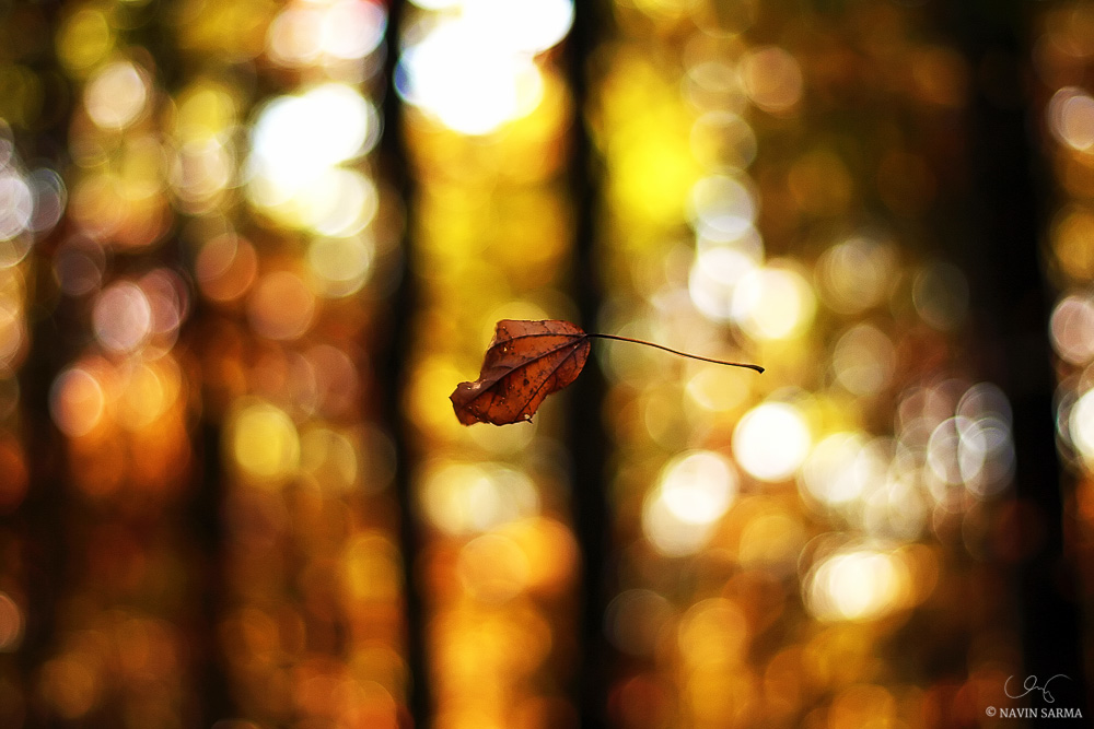 A autumn-colored leaf is suspended by a cobweb in a Maryland forest
