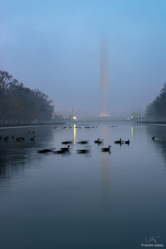 Geese swim by during a foggy sunrise at the reflecting pool at the Washington Monument and National Mall.