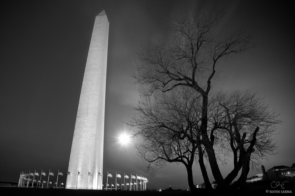 The Washington Monument and an oak tree during a winter moonrise