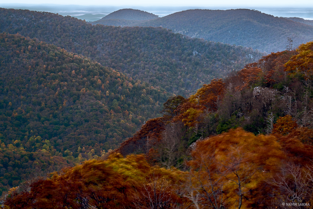 Autumn colored trees shake in the wind and cover the hills leading towards the Shenandoah Valley