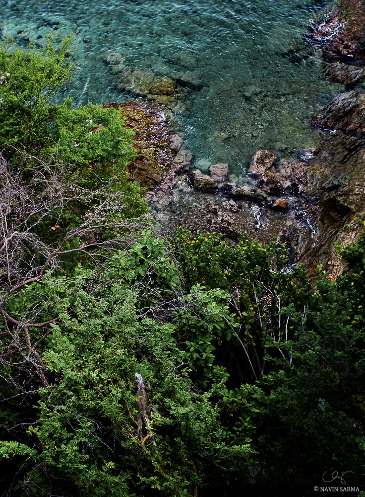 An iguana creeps up a branch beneath a cliff in St Thomas