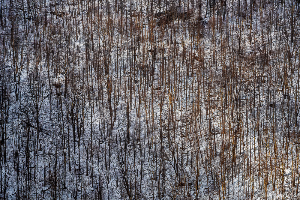 Bare trees over the snowy hills of Lindy Point are highlighted by afternoon sun