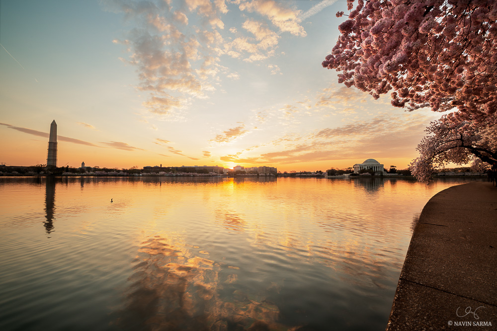A radiant sunrise pierces through colorful cherry blossoms at dawn on the Tidal Basin.