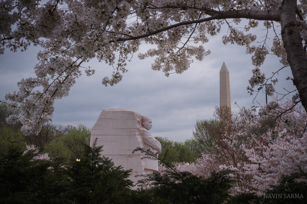 Cherry Blossoms over the Martin Luther King Memorial