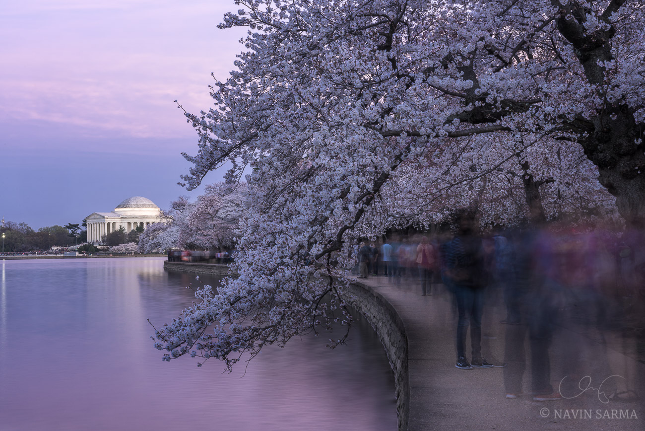 Jefferson Memorial Cherry Blossom Long Exposure
