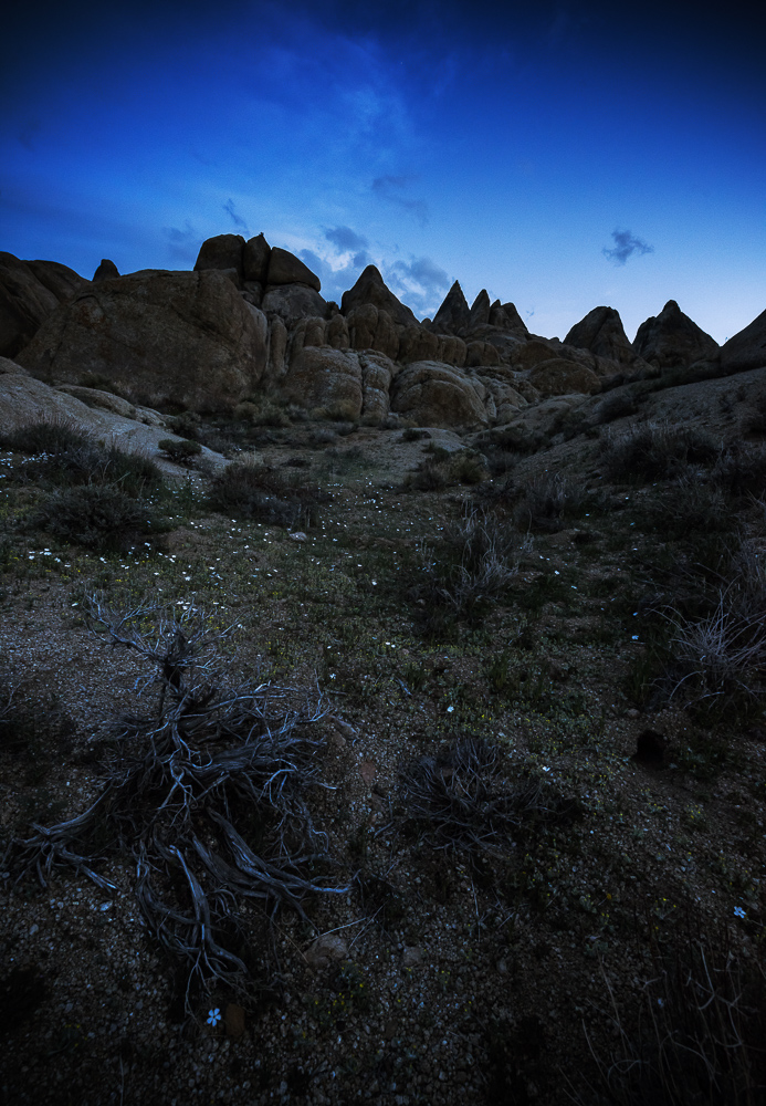 Miniscule, multicolored flowers, dried shrubs, and stark peaks adorn the desert landscape of Alabama Hills