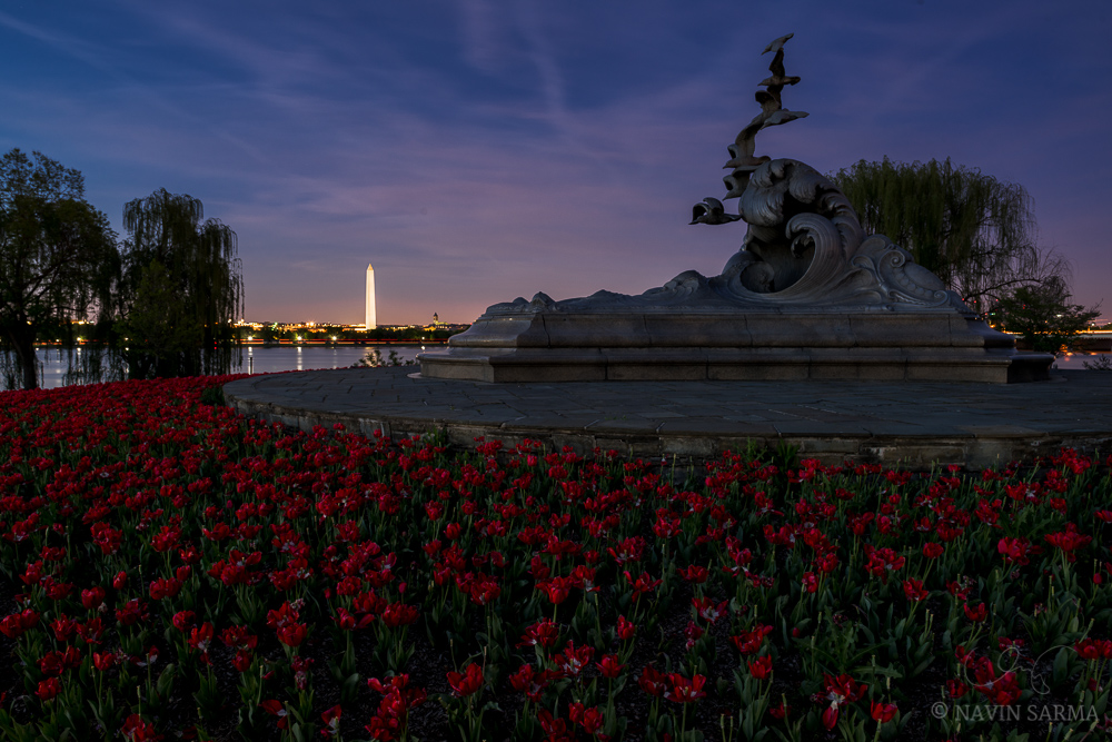 Pinks and blues on the horizon past sunset over tulips at the Navy Merchant Marine Memorial