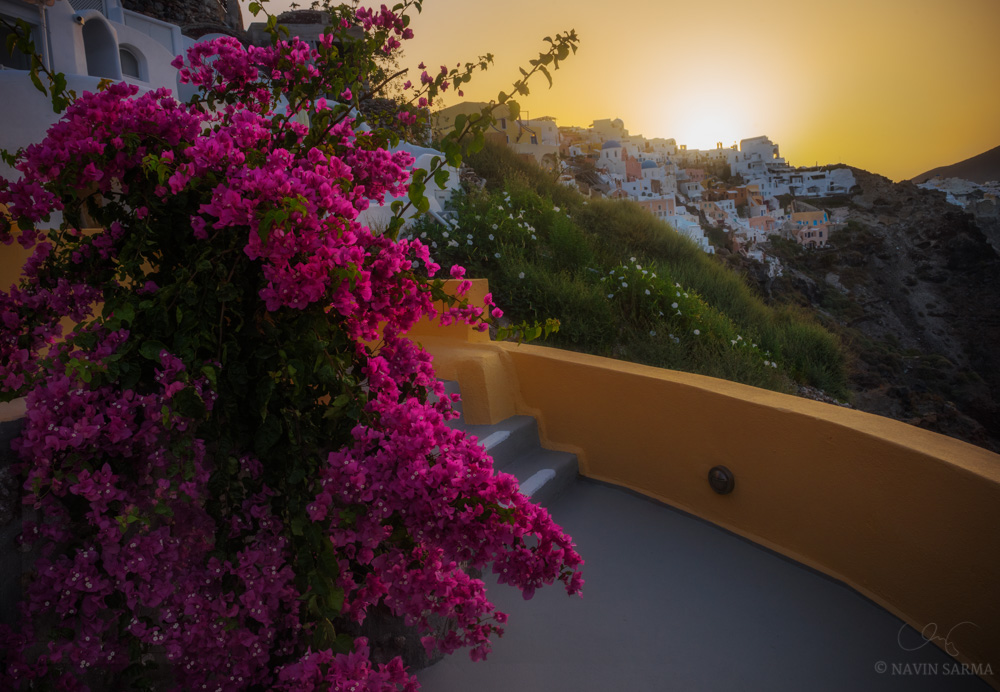 Vibrant flowering trees and calla lillies line the architecture of Oia, Santorini as the sun warms the sky and landscape