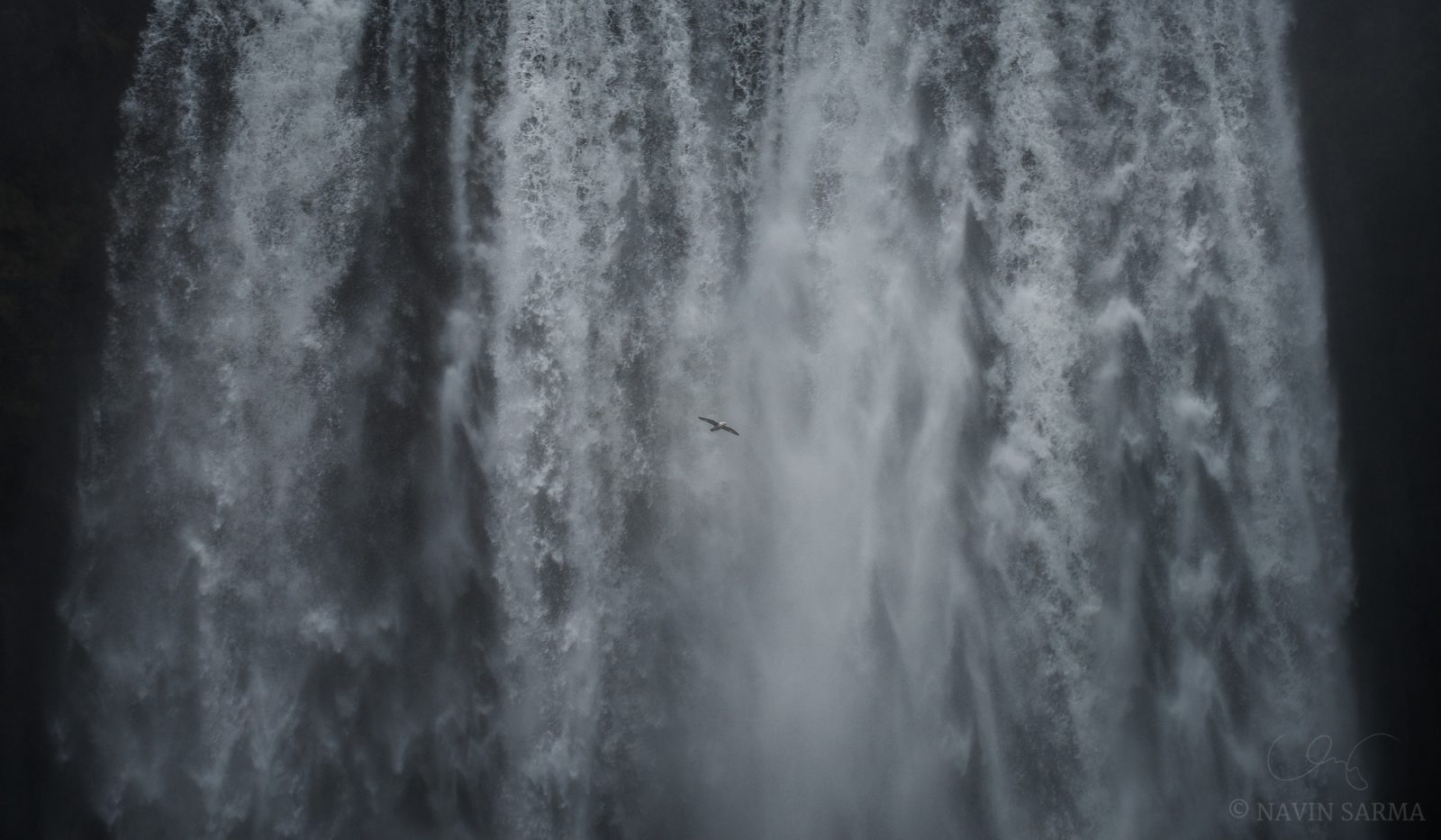 A seagull soars across the massive Skógafoss waterfall in search of food