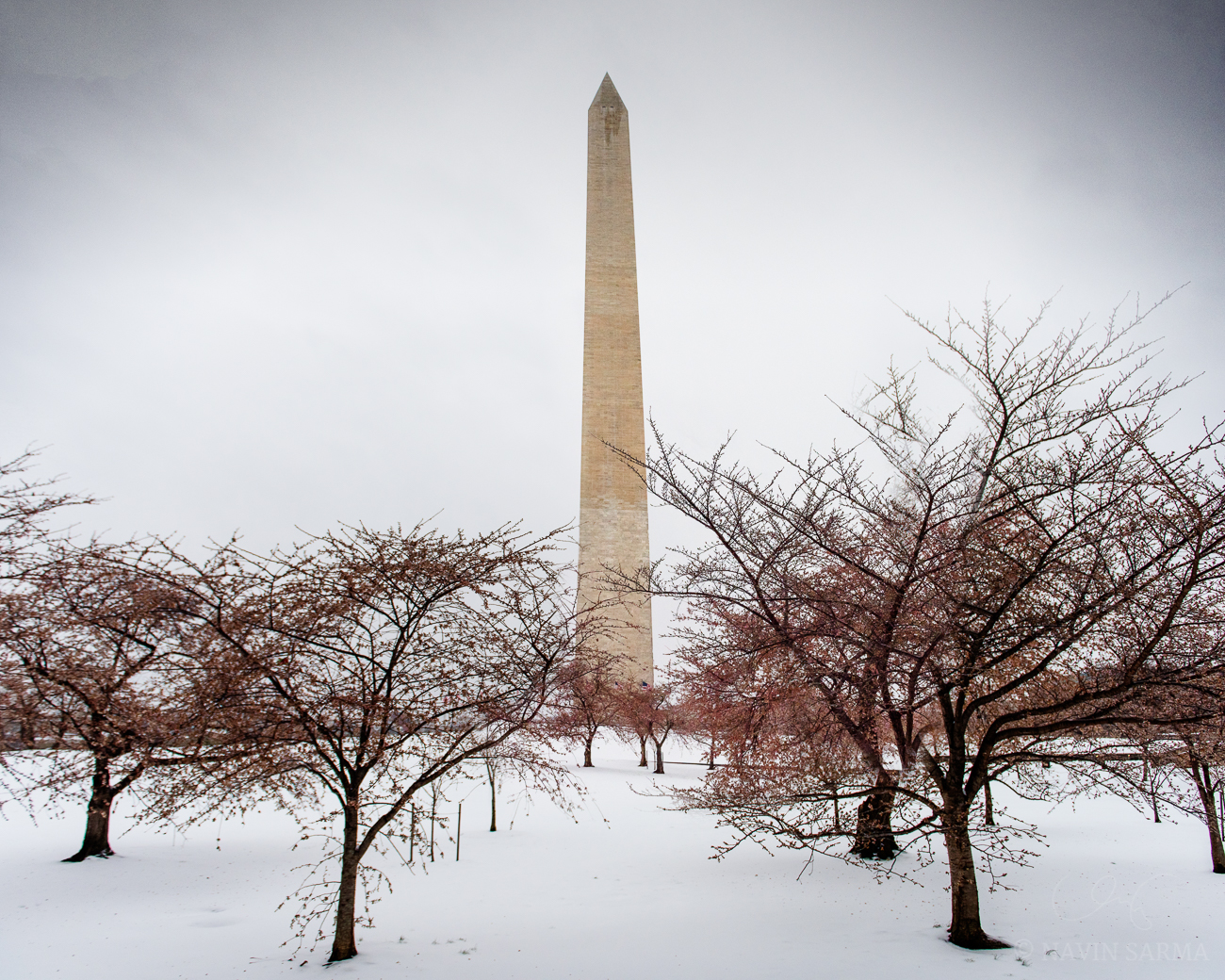 Washington Monument Frozen Blossoms