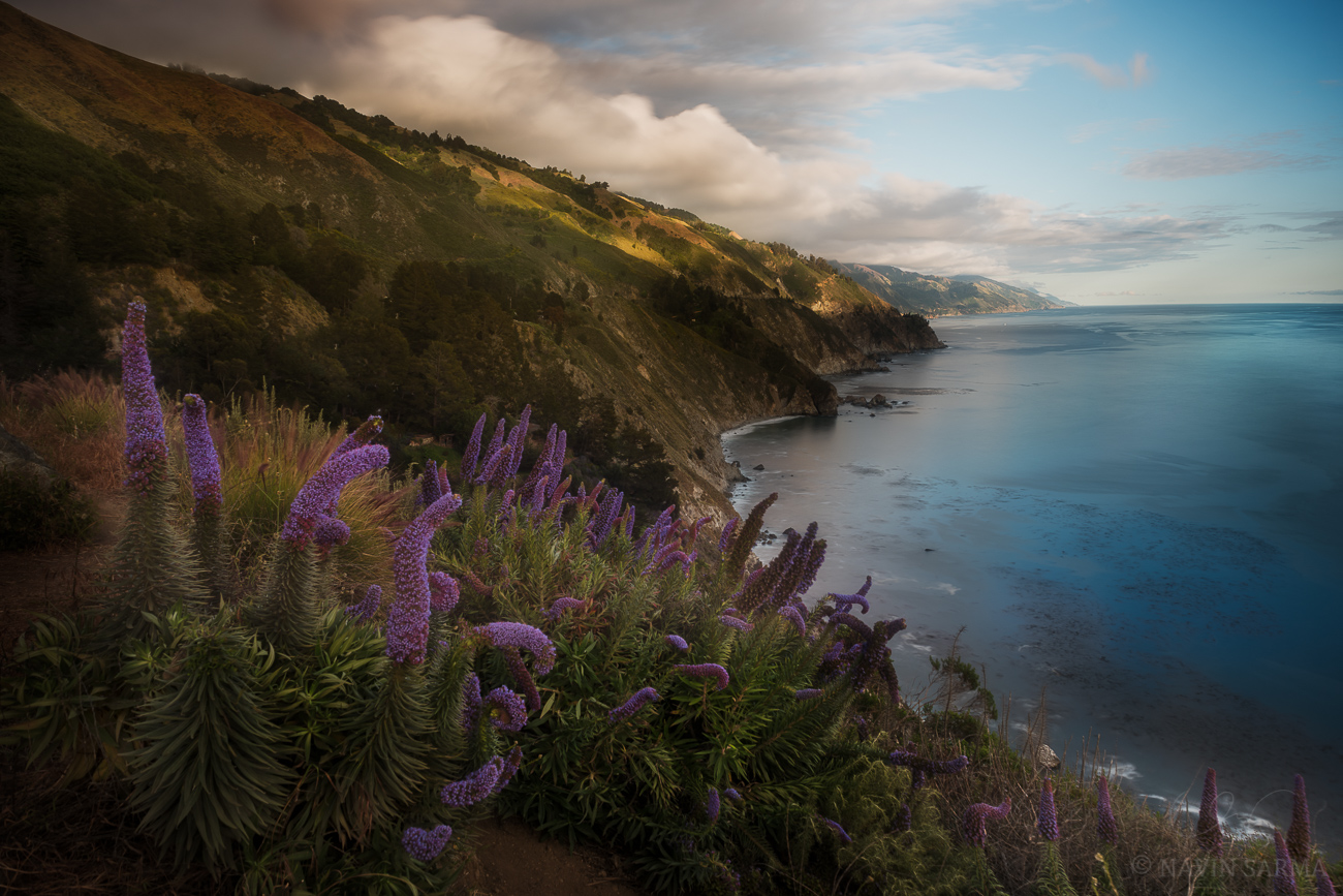 Dappled light over the cliffs over fields of flowers at the coast near Big Sur