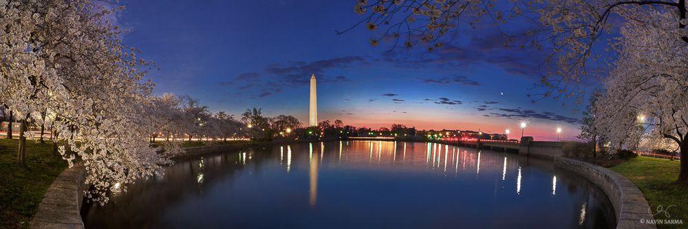 Peak cherry blossoms under the crescent moon at the Tidal Basin of Washington DC