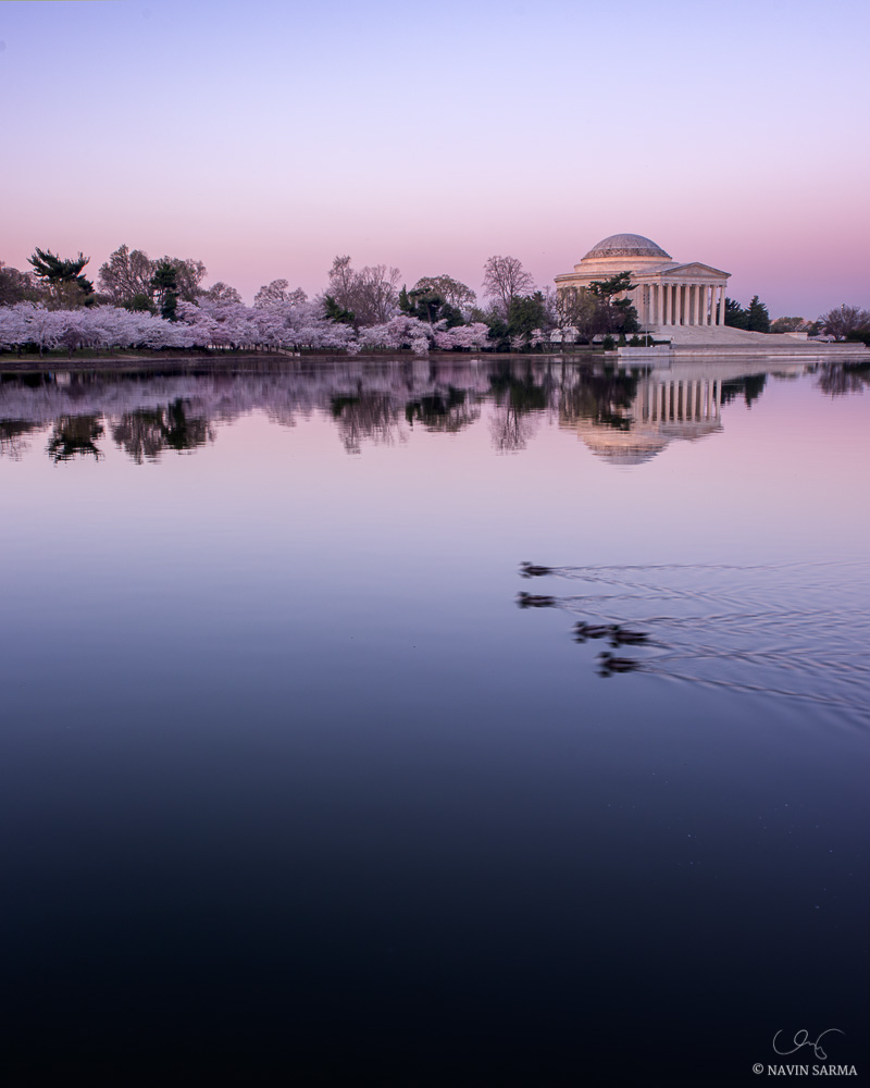 After the long, cold winter of 2013, the cherry blossoms signal the beginning of spring during this peacefully glowing sunrise at the Tidal Basin