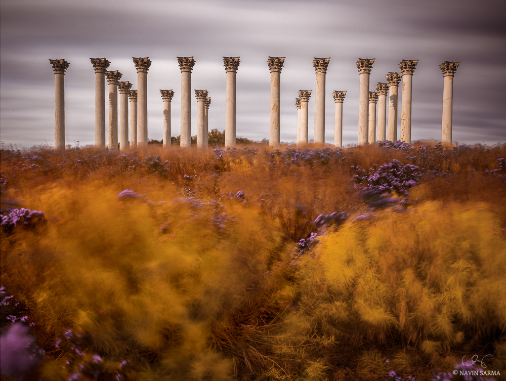 High winds and moving clouds create motion in the autumn brush at the Capitol Columns of ntational Arboretum