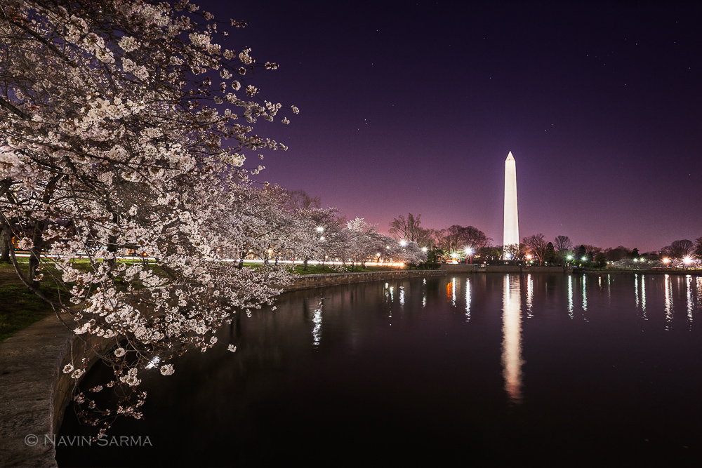 Twilight purples and pinks just past sunset at the Tidal Basin of Washington DC in front of Cherry Blossoms