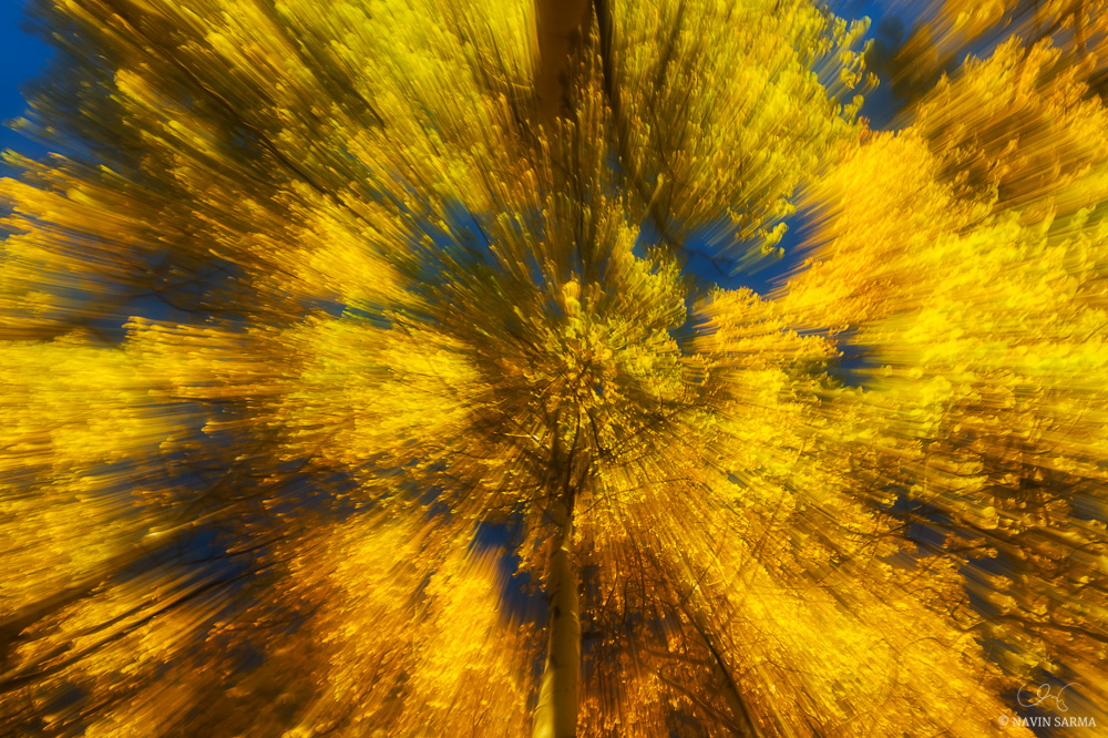Motion blur from a lens zoom creates an image from autumn-colored aspens below the clear blue sky