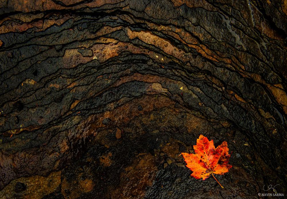 Curves in broken shale rock lead to a fallen leaf