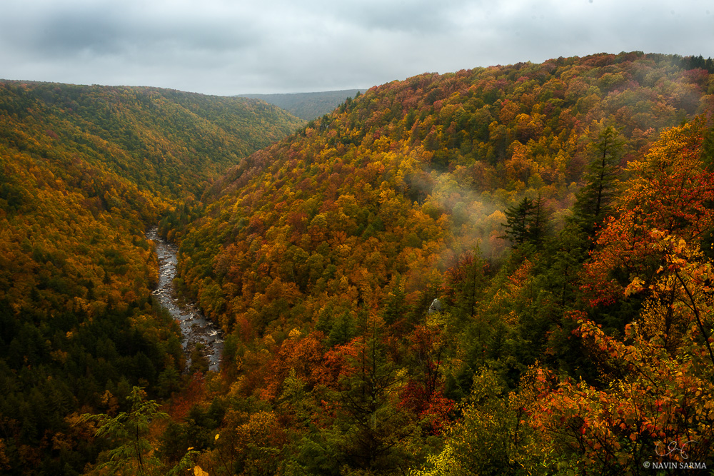 Misty fog rolls in and out of Pendleton Point in Blackwater Falls State Park