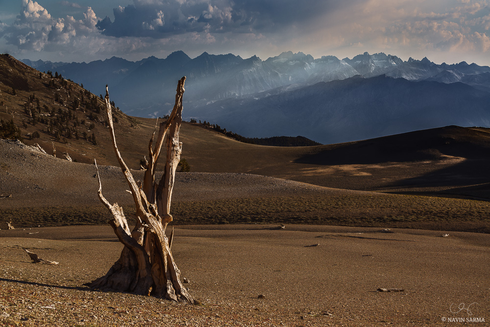 A lone bristlecone pine in the desert of the White Mountains stands before the Sierra Nevada mountains, as seen as sun streams through the haze of wildfire smoke