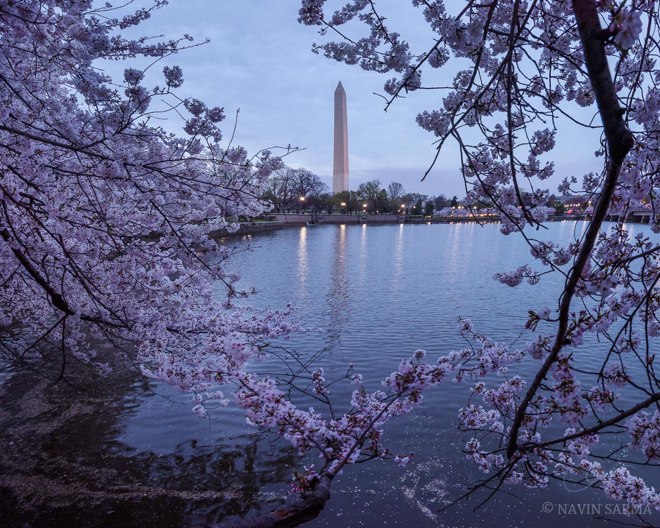 Sunrise at the Tidal Basin Cherry Blossoms