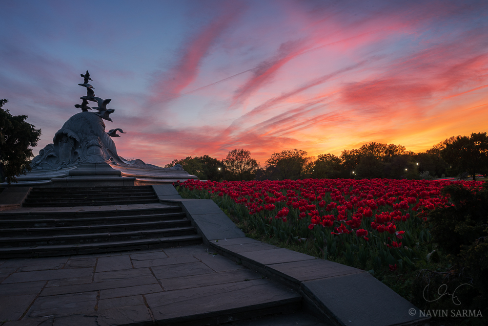 Oranges and pinks of sunset converge with the red and green tulips at the Navy Merchant Marine Memorial