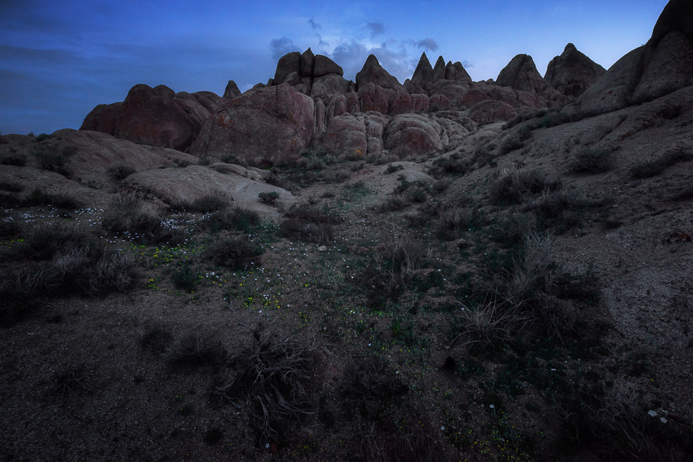 Delicate flowers line the loose sands of Alabama Hills at sunset
