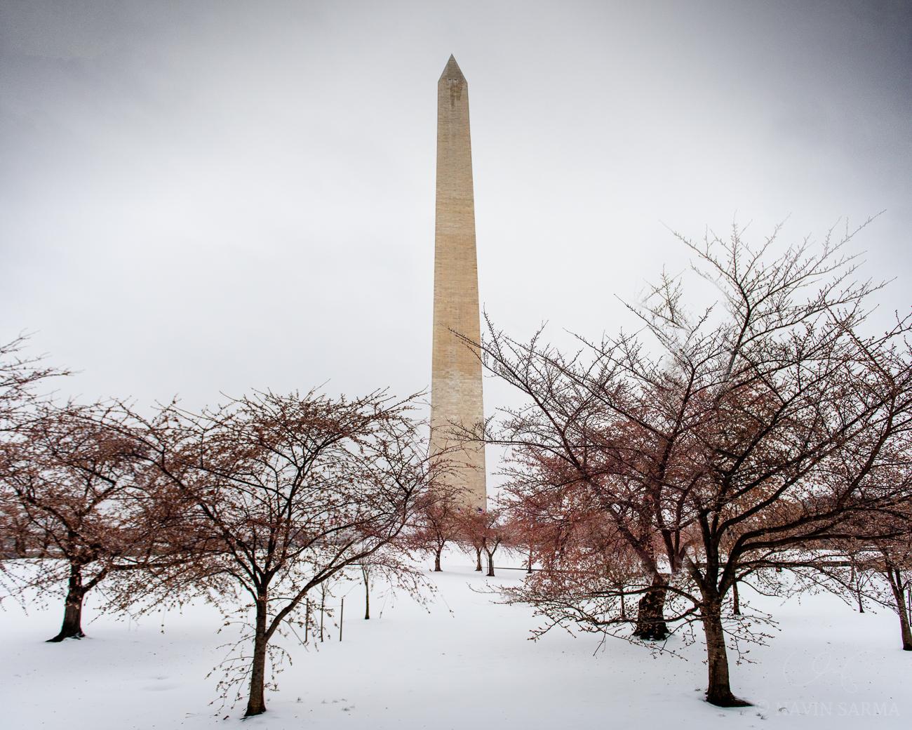 Washington Monument Frozen Blossoms